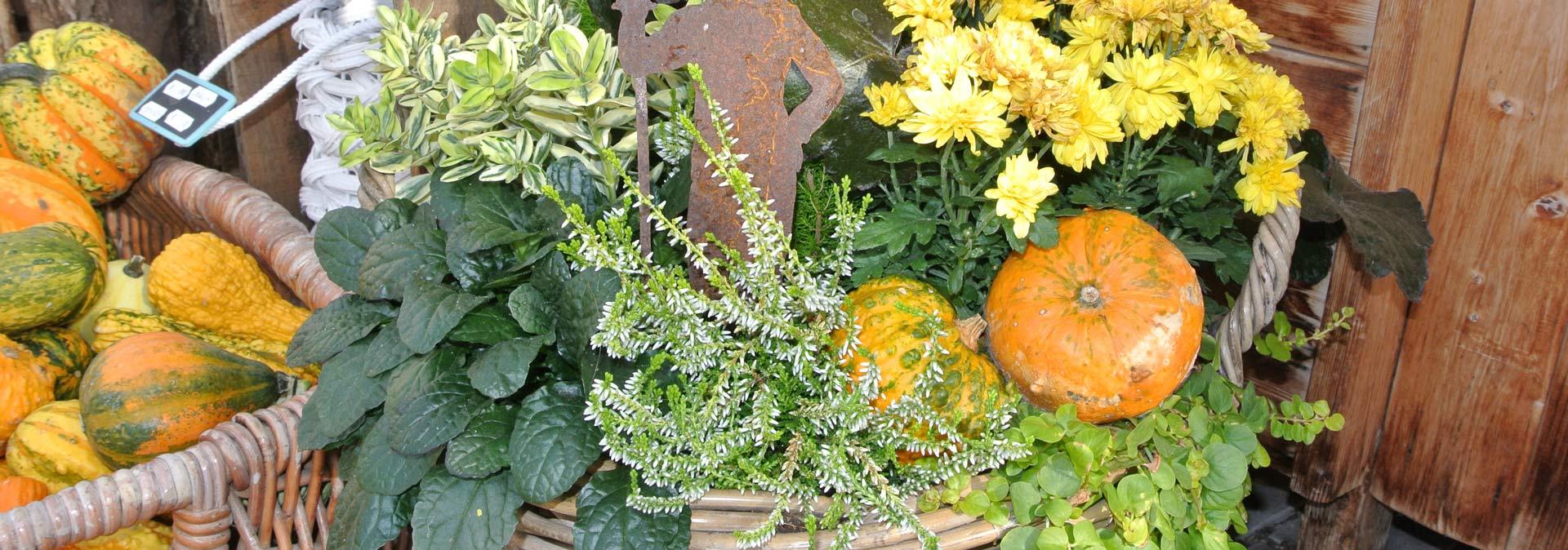 Kürbisse und Blumen